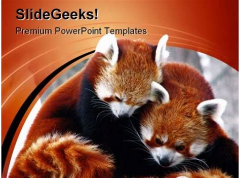 Red Pandas Cuddling Animals PowerPoint Templates And