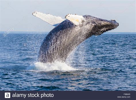 Whale Photos & Whale Images - Alamy