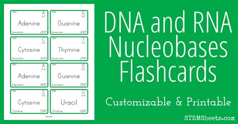 DNA and RNA Nucleobases Flashcards | STEM Sheets