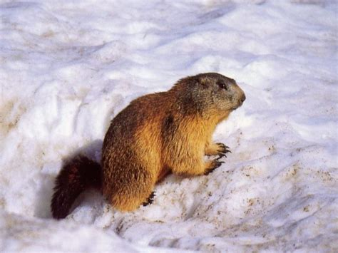 Translation from English to French: Gopher? | Yahoo Answers