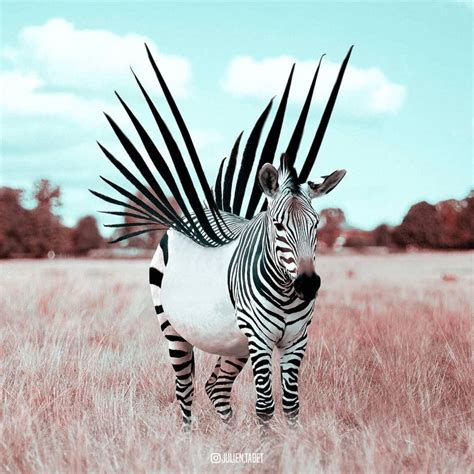 Meetup to the People: How a Zebra could Rise from a